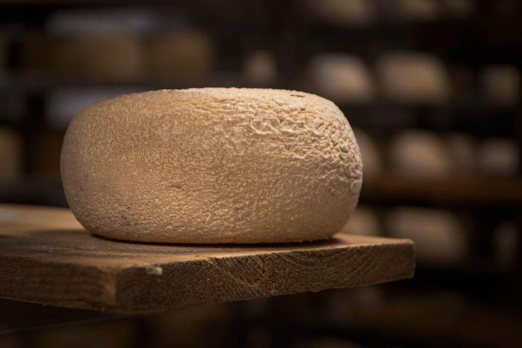 come stagionare il formaggio pecorino in casa